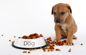 Do not overfeed your dogs this quarantine period