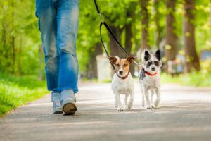 You need to take precautions while walking your dog this quarantine