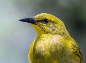 Apart from the fact that they are one of the low maintenance pets, canaries are a delight on their own