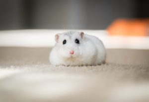 Hamsters are one of the cutest low maintenance pets you can choose for your children