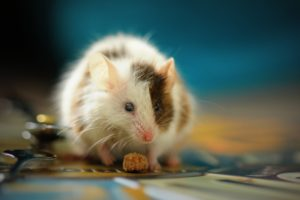 Mice are low maintenance pets who are good nurtured and curious creatures