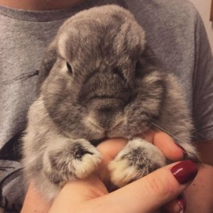 Your pet rabbit needs regular trimming of their nails, as they never stop growing