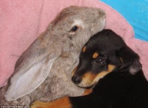 Your rabbit as a pet would love the company of other animals