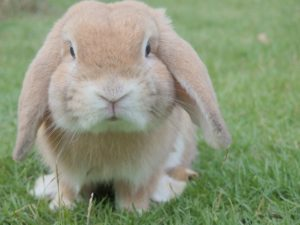 Rabbits are one of the inexpensive low maintenance pets.