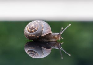 Snails are friendly and relatively low maintenance pets.