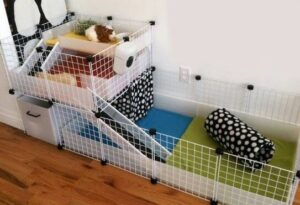 To care for Guinea pigs set up a comfortable cage for them
