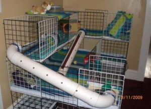 Find a perfect location for your pets cage to take good care for guinea pigs