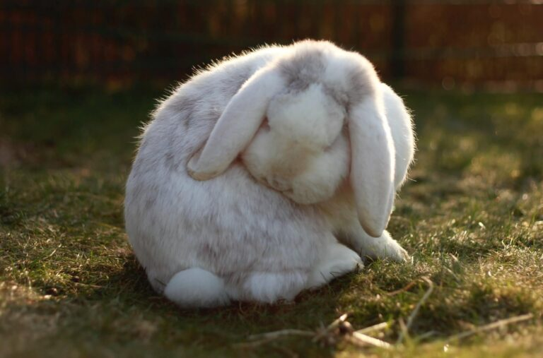 How to care for a pet rabbit – an In-depth guide