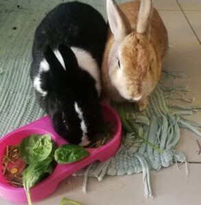 Supplement your pet rabbits diet with fresh fruits and vegetables