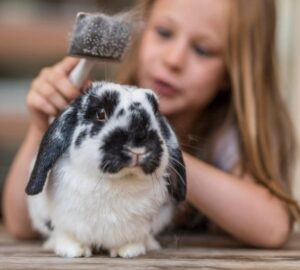 Groom your pet rabbits frequently to get rid of all the dander
