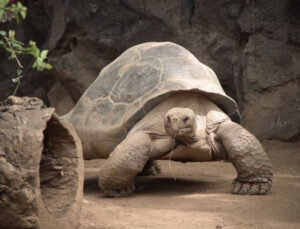 not all turtle breeds are suitable to be kept as a pet