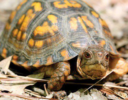 How to care for pet turtles - an In-depth Guide