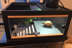 Turtles need a basking platform to dry themselves up