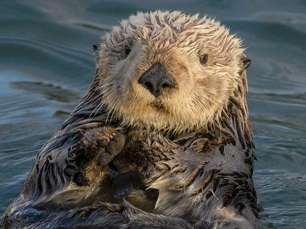 a sea otter in the middle of the sea