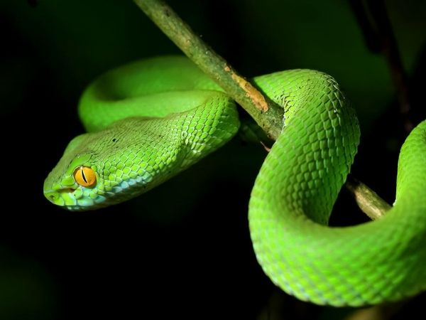snakes are one of the most dangerous animal in the world