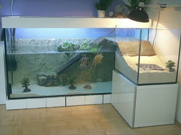 large turtle cage