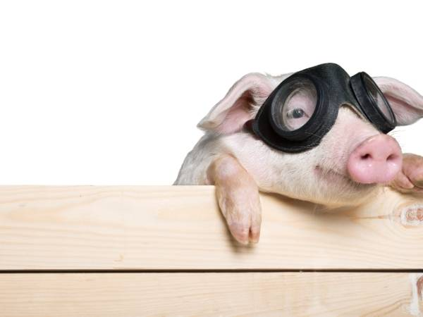 Cute pig with glasses - Zoollery