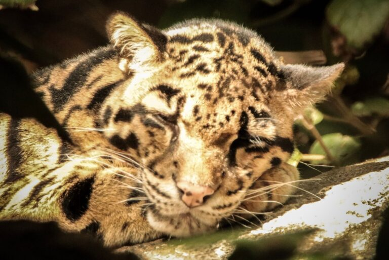 9 Legal Exotic Pets you can own in Wisconsin – 2021