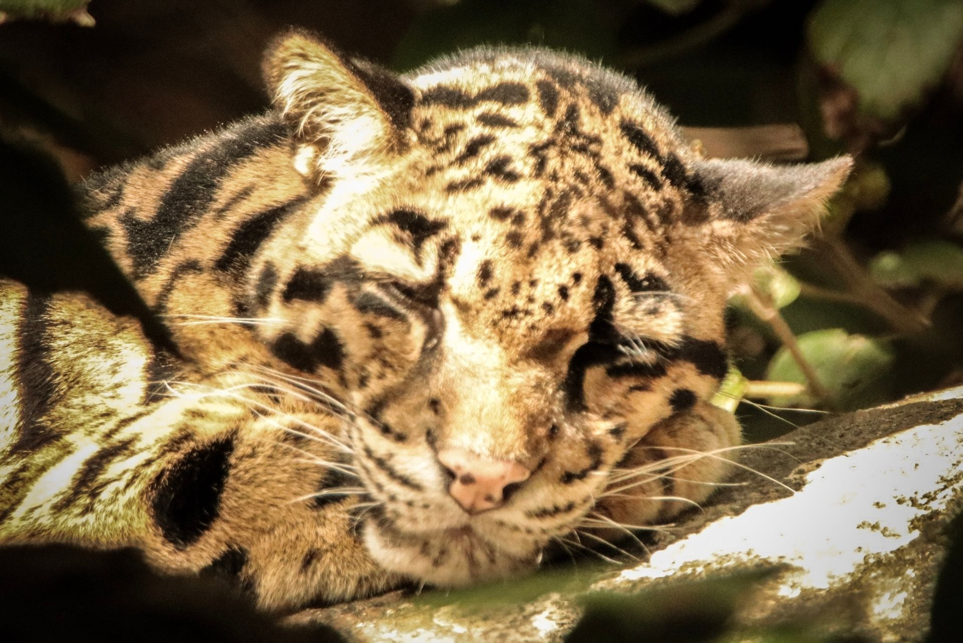 9 legal exotic pets you can own in Wisconsin